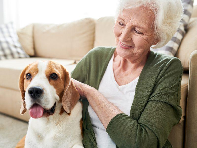 positive-senior-owner-stroking-dog-XWE279T.jpg